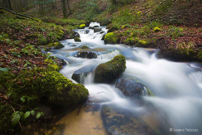 Le ruisseau de la Resse coule dans les forêts de hêtres et de chataigniers. C'est le versant nord de la Montagne noire dans le Tarn.
